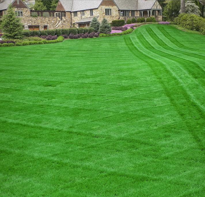GreenTRX Healthy Lawn
